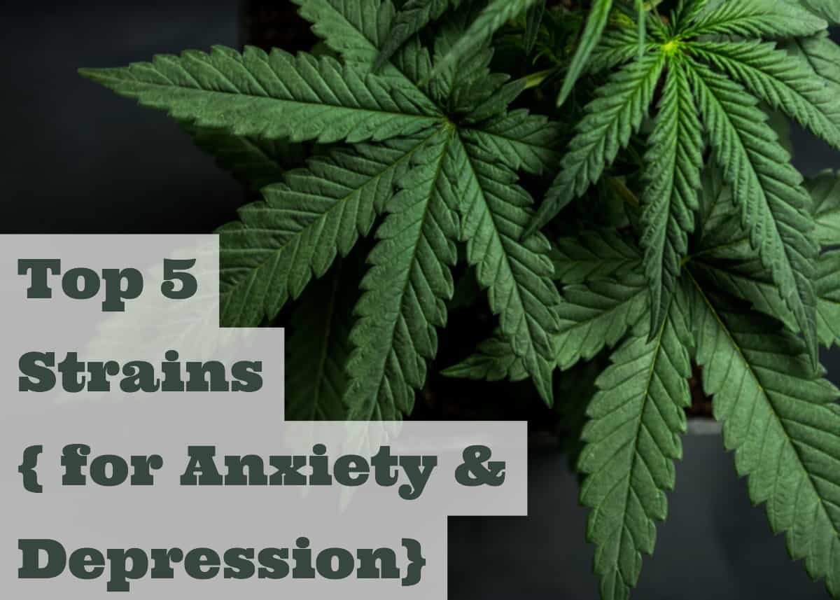 top-weed-cannabis-strains-for-anxiety-and-depression